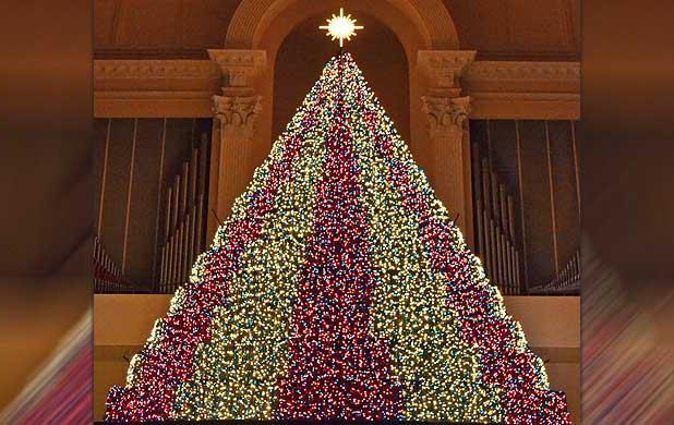 The Living ChristmasTree